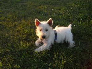 na trávě
