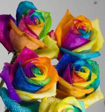 Barvené růže v detailu, neskutečné :)