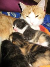 Naše koťátka... škoda, že budou muset pryč :-(