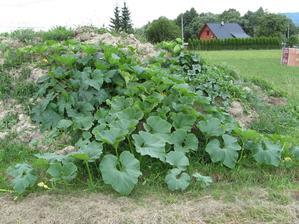Zahrádka se poněkud rozrostla, dýně se tlačí k sousedům :-) Ale úroda je slušná