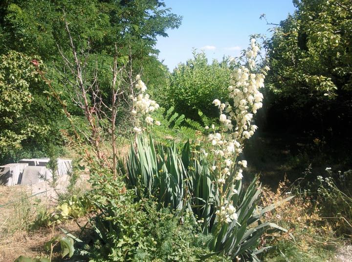 Príbeh našej záhrady/chatky, príp. čo sa mi páči - Obrázok č. 86
