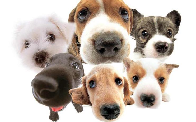 Život bez psa je život pod psa :) - Fotka skupiny