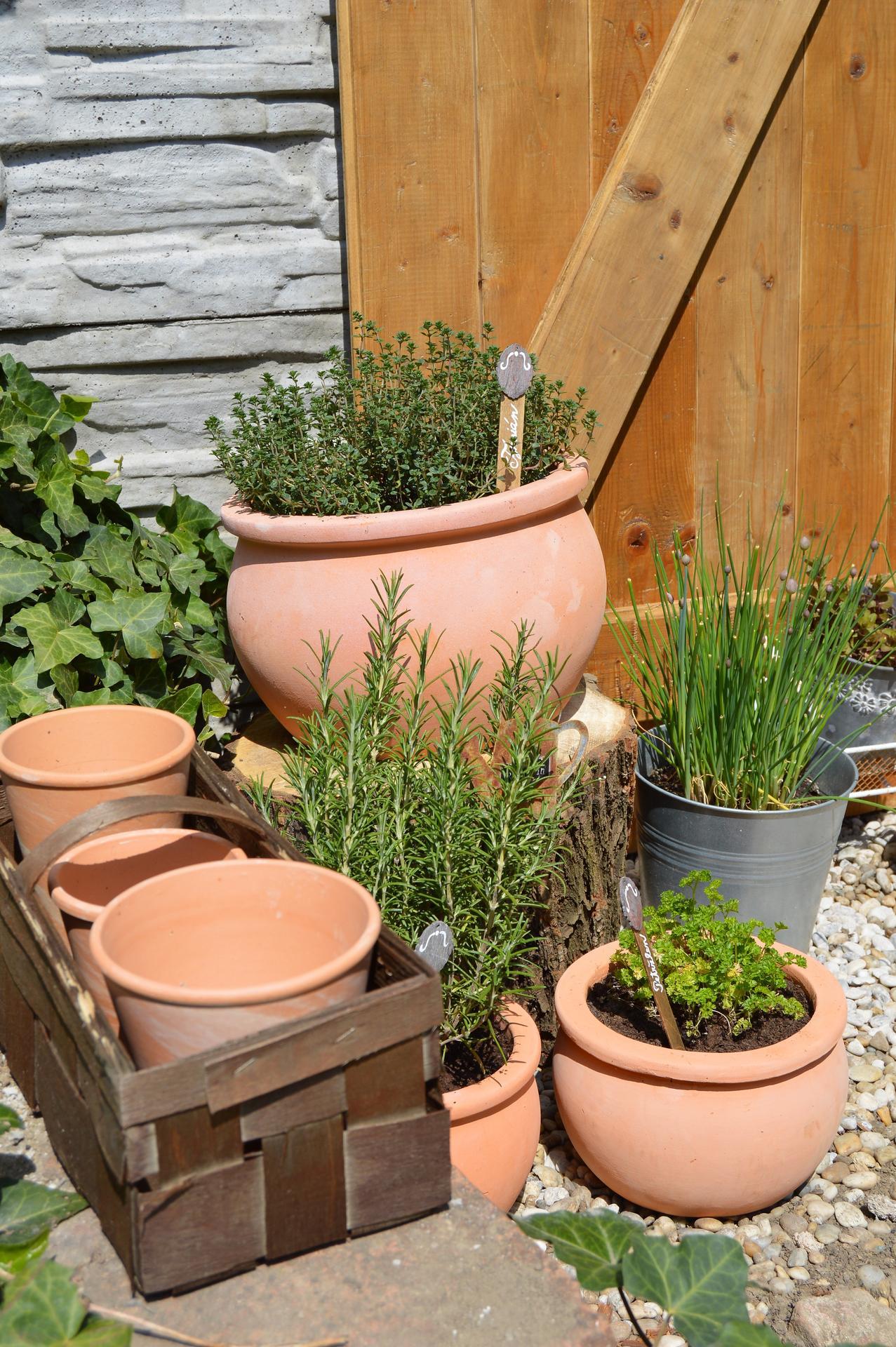 Terasa a záhrada 2020 - menšie a väčšie premeny - Obrázok č. 11