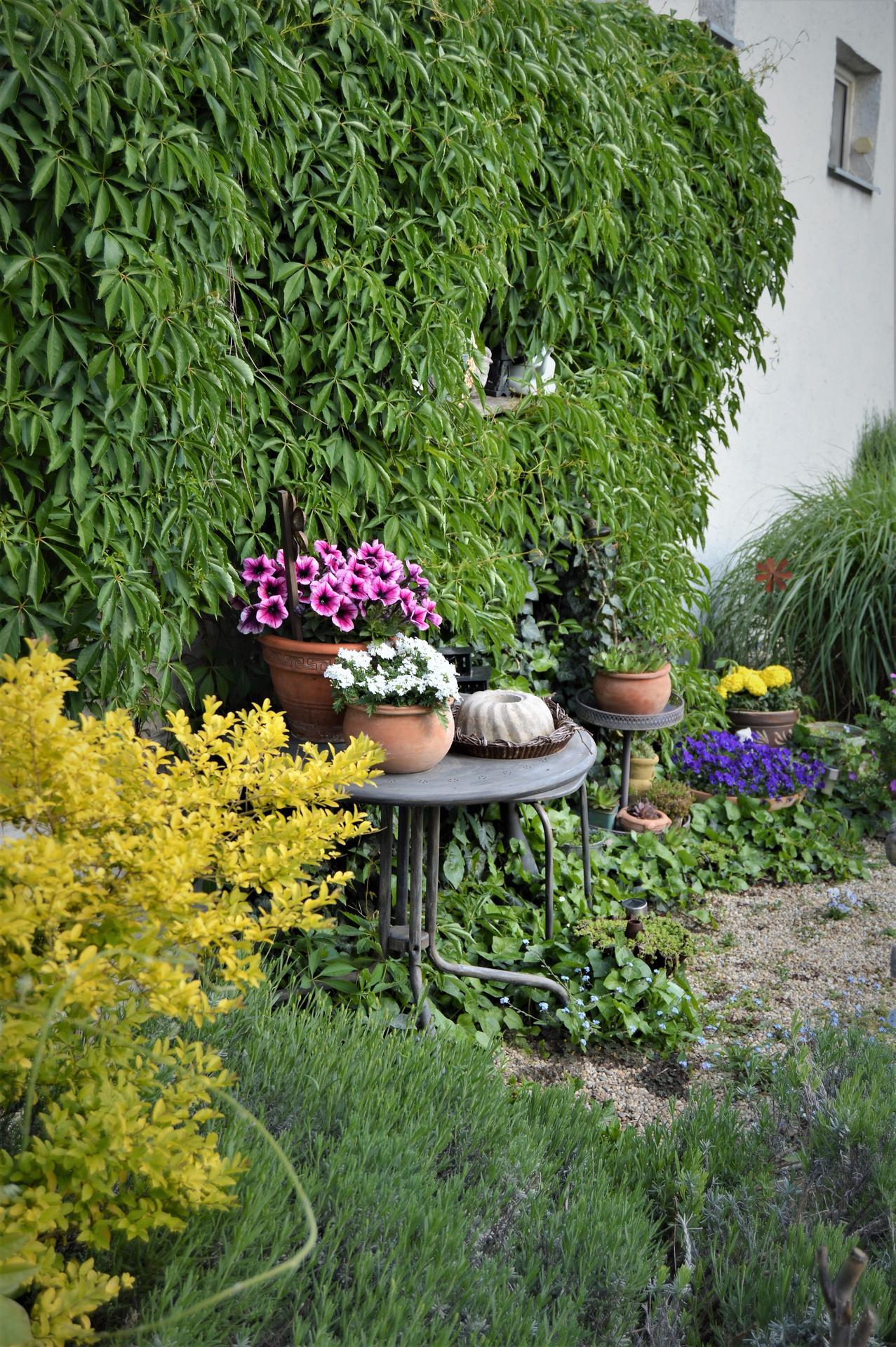 Terasa a záhrada 2020 - menšie a väčšie premeny - Obrázok č. 44