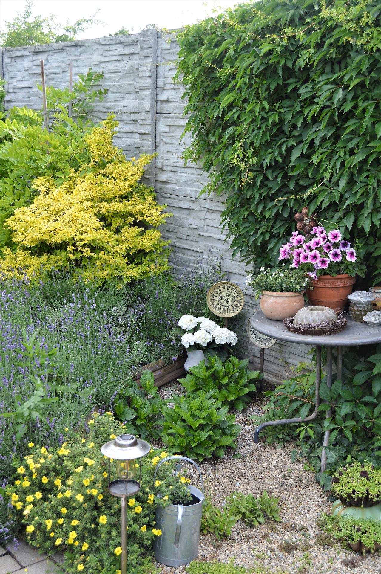Terasa a záhrada 2020 - menšie a väčšie premeny - Obrázok č. 81
