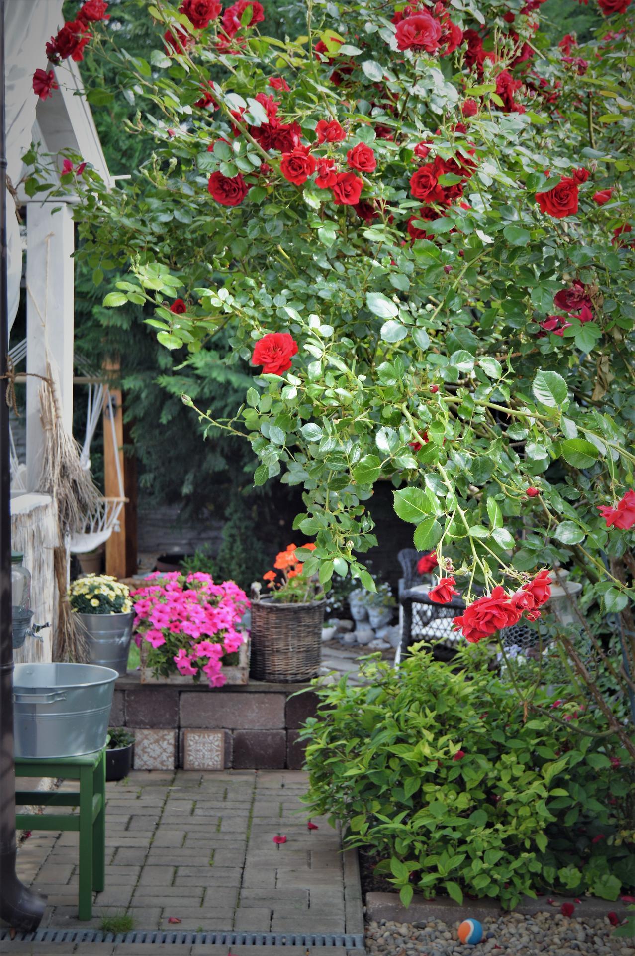 Terasa a záhrada 2020 - menšie a väčšie premeny - Obrázok č. 82