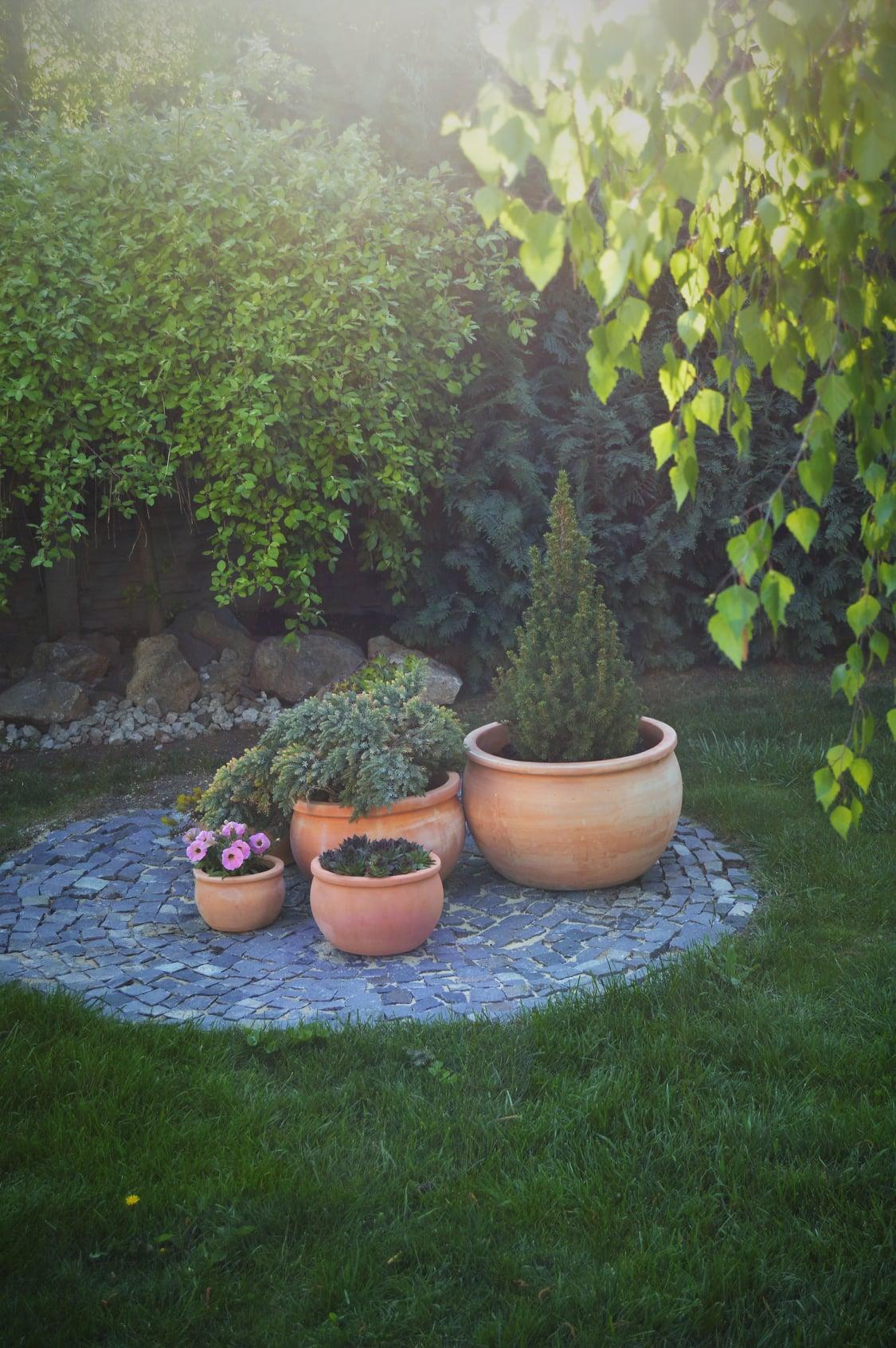 Záhrada a terasa 2021 - Obrázok č. 9