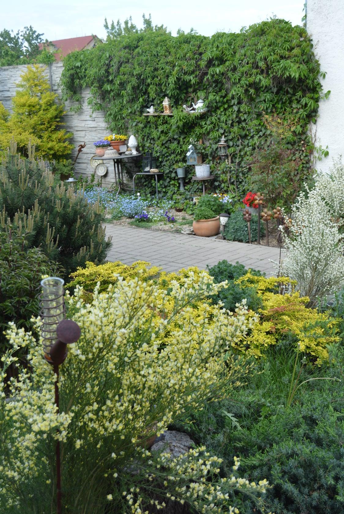 Záhrada a terasa 2021 - Obrázok č. 14