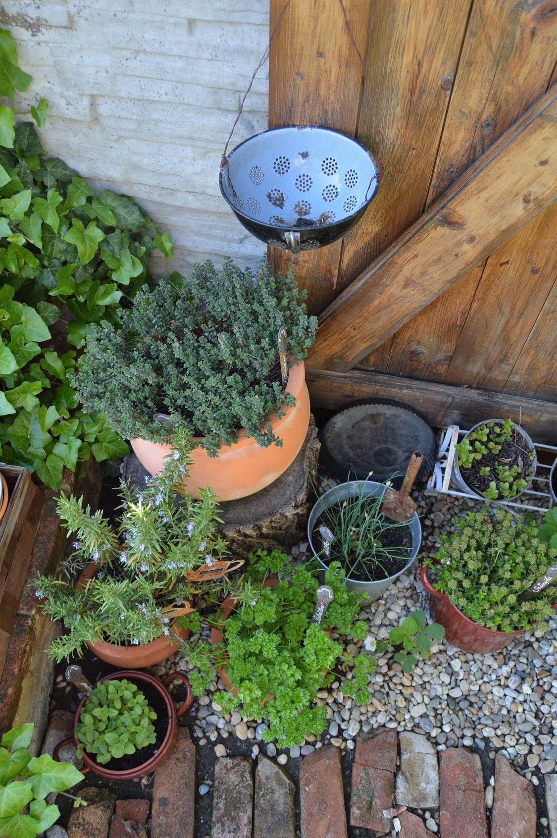 Záhrada a terasa 2021 - Obrázok č. 24
