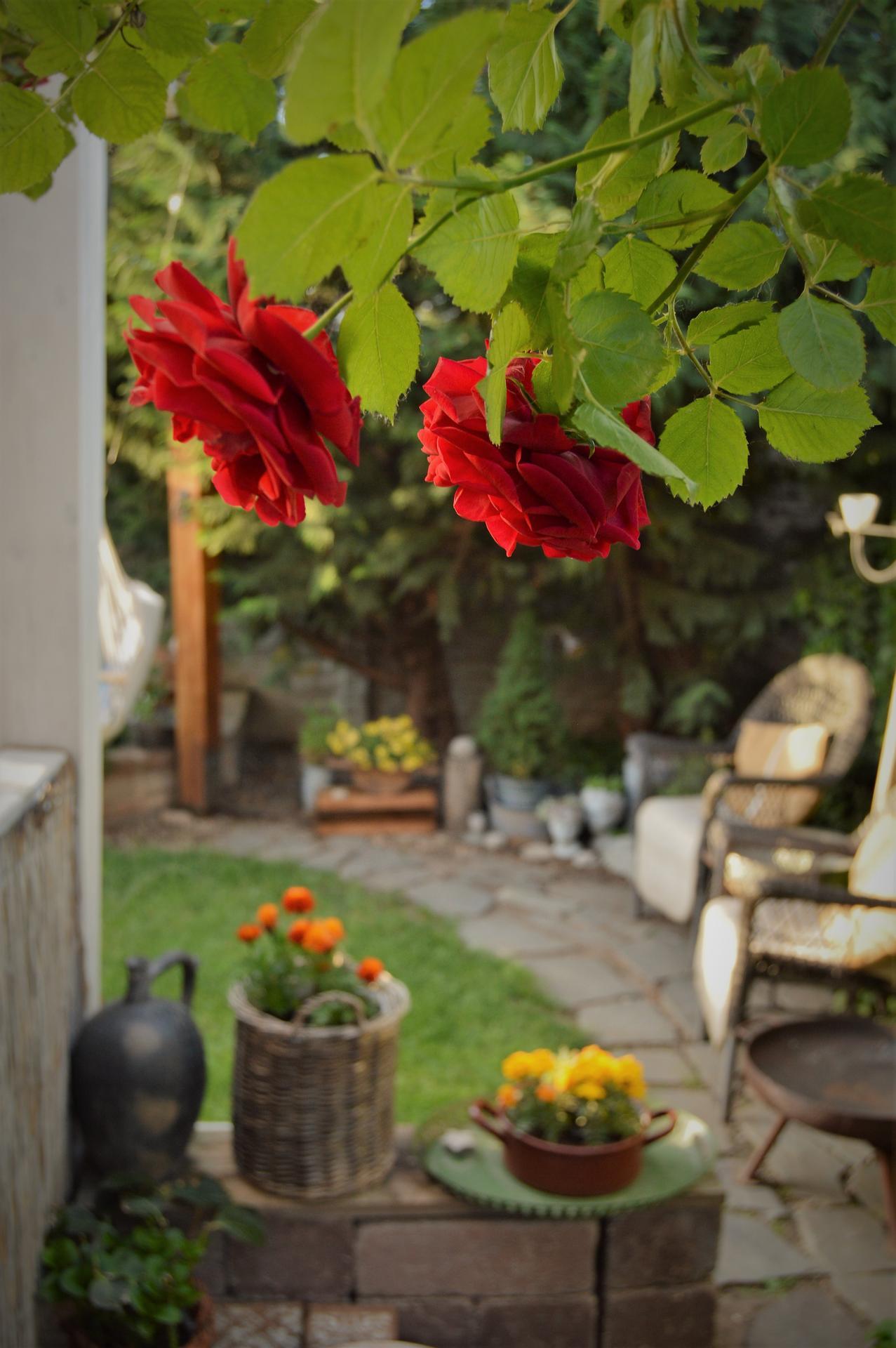 Záhrada a terasa 2021 - Obrázok č. 44