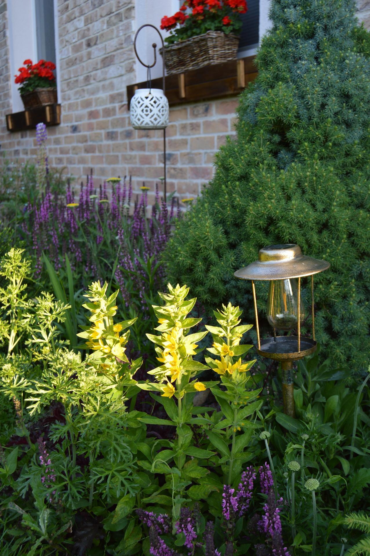 Záhrada a terasa 2021 - Obrázok č. 37