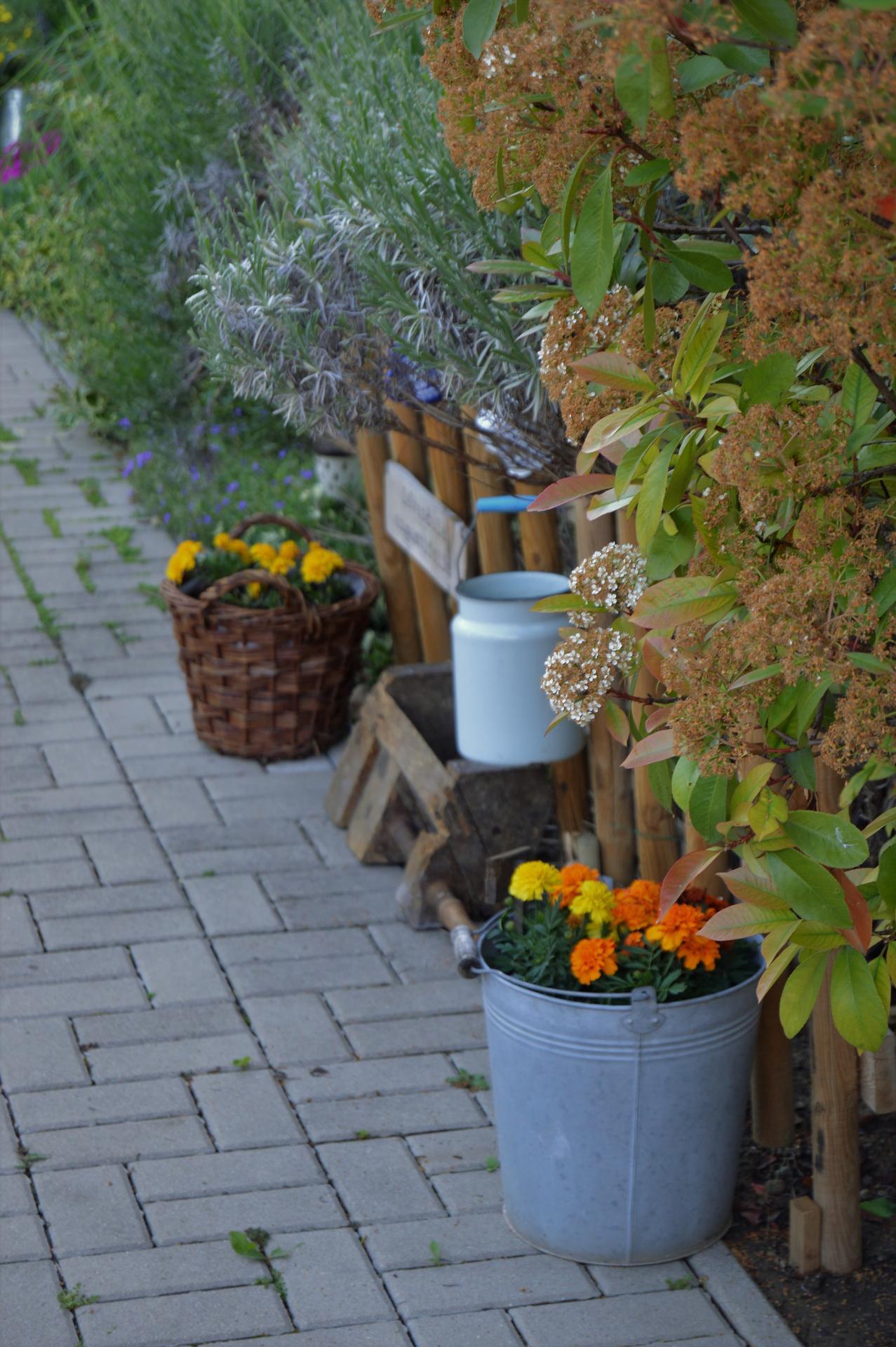 Záhrada a terasa 2021 - Obrázok č. 39