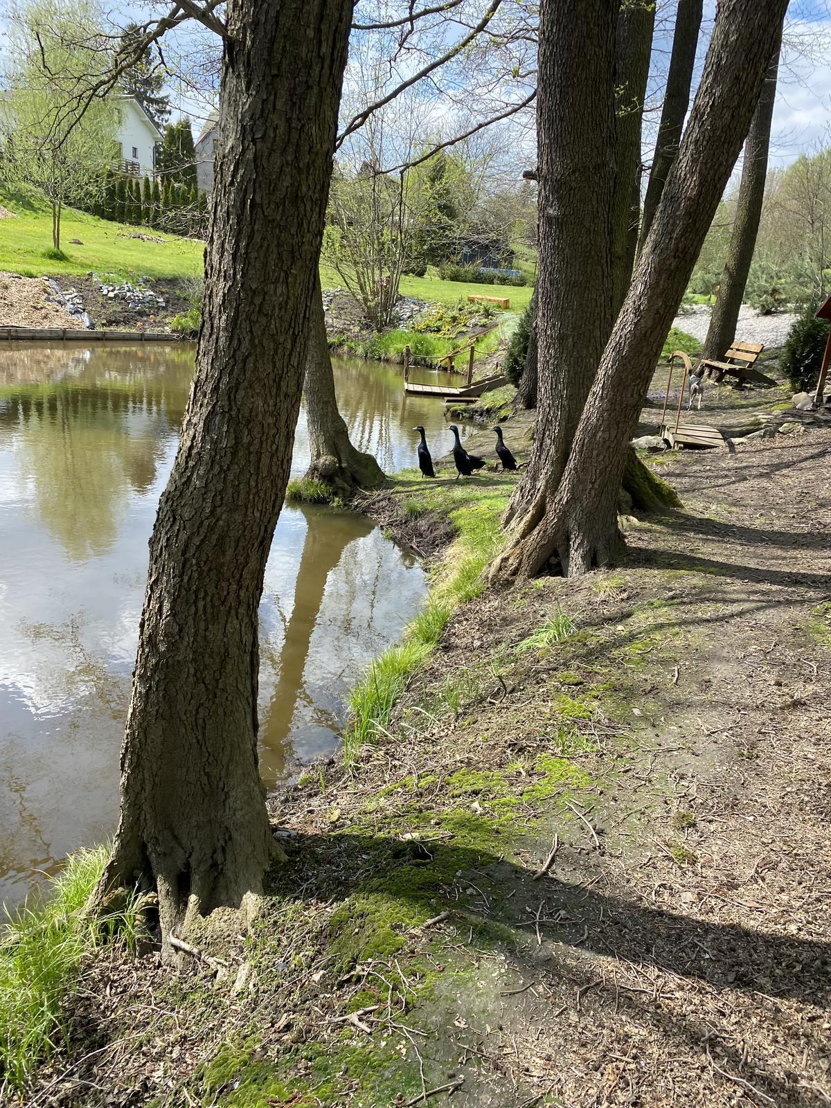 Zahrada u rybníčku - Obrázek č. 27