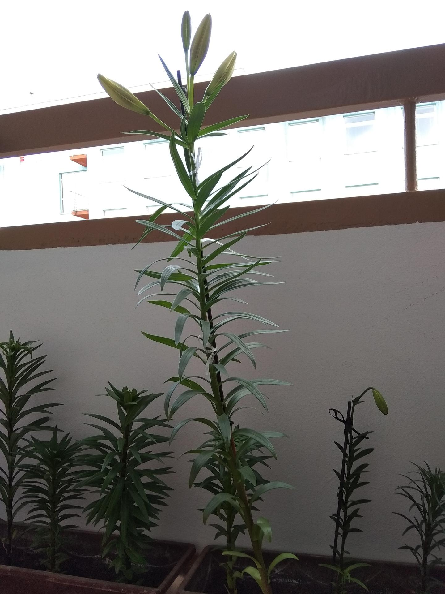 Moje balkónové kvetinkové miš - maš 🙂🌻🥀🍀🌸 - Obrázok č. 30