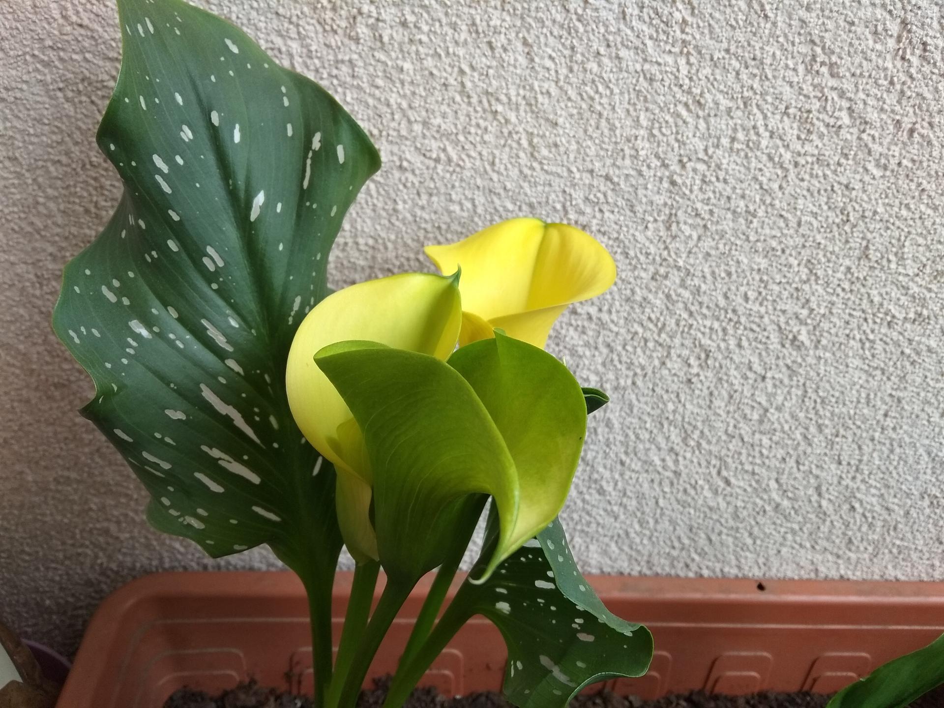 Moje balkónové kvetinkové miš - maš 🙂🌻🥀🍀🌸 - Obrázok č. 4