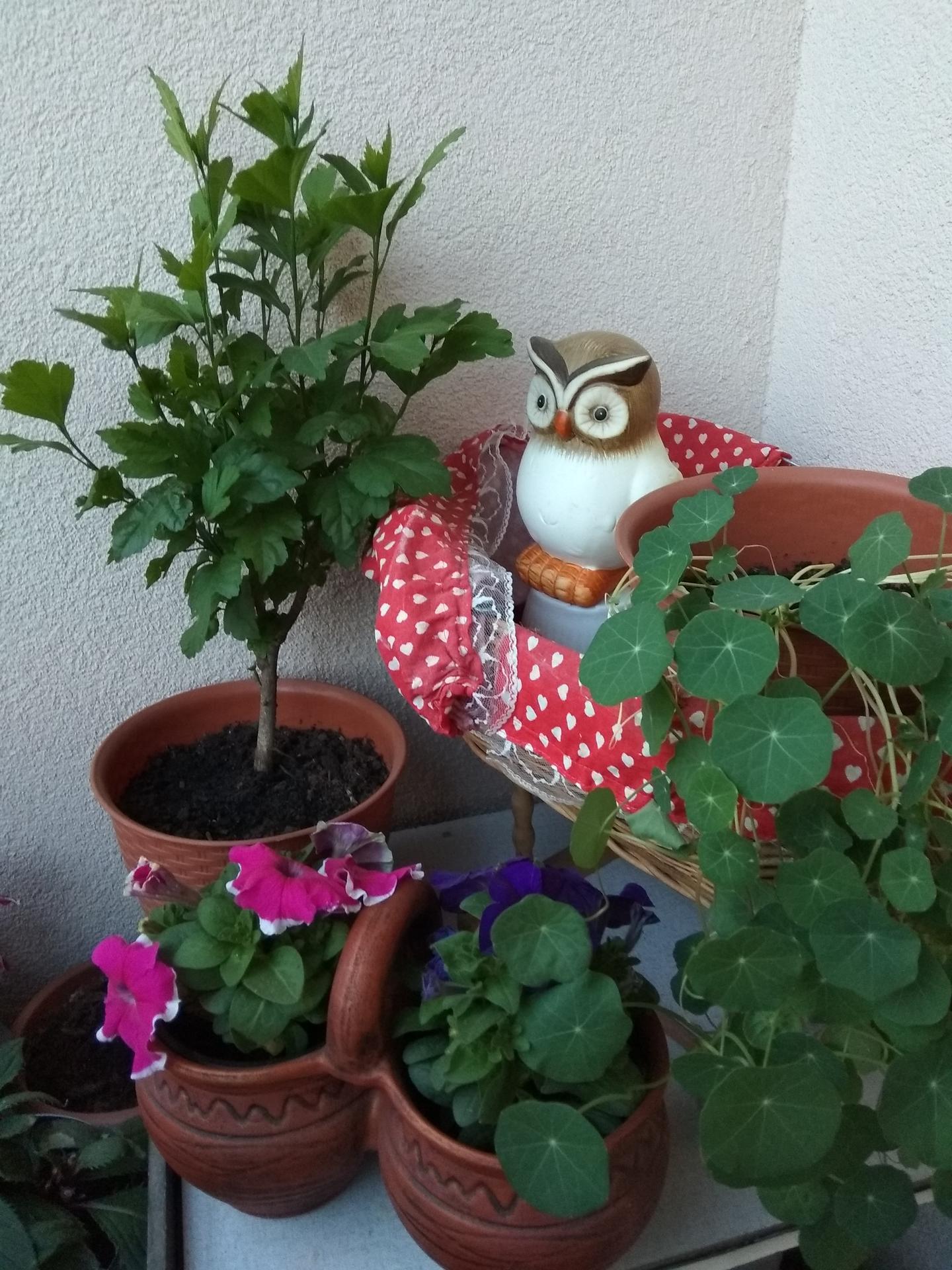 Moje balkónové kvetinkové miš - maš 🙂🌻🥀🍀🌸 - Obrázok č. 43