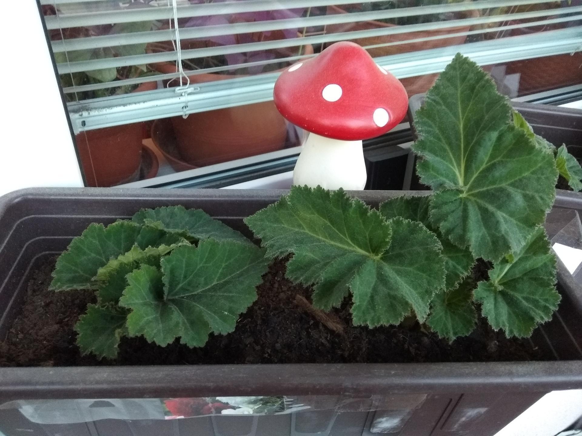 Moje balkónové kvetinkové miš - maš 🙂🌻🥀🍀🌸 - Obrázok č. 42