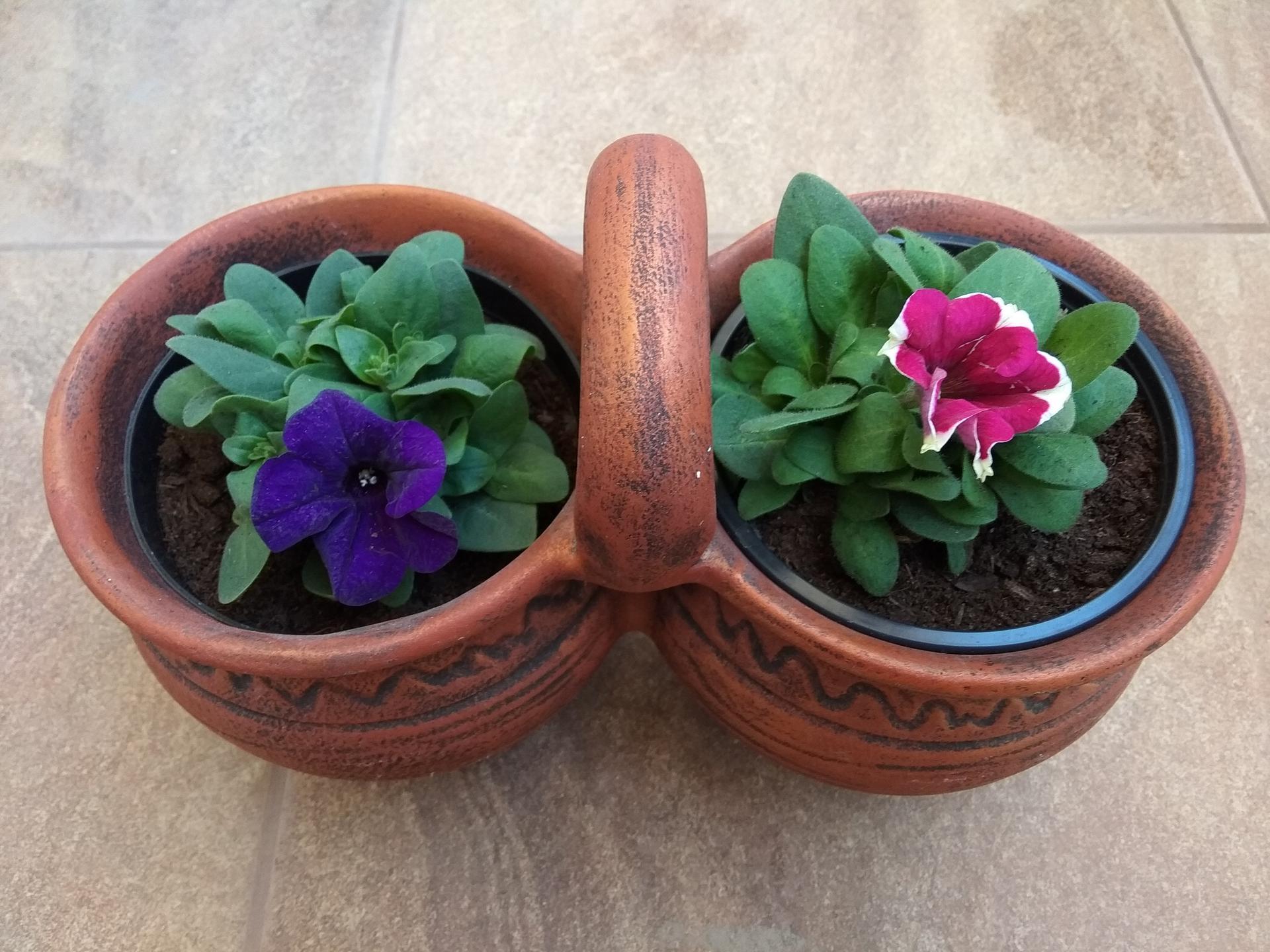 Moje balkónové kvetinkové miš - maš 🙂🌻🥀🍀🌸 - Obrázok č. 46