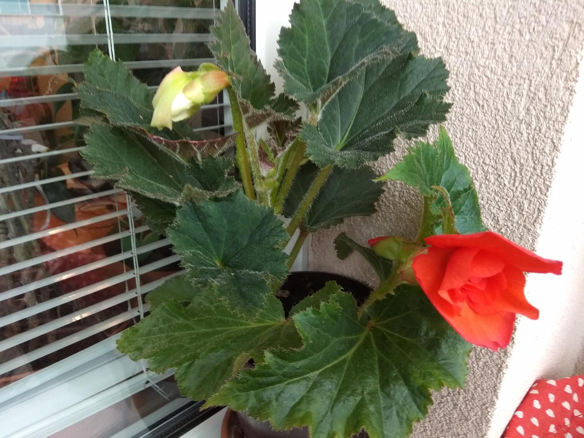 Moje balkónové kvetinkové miš - maš 🙂🌻🥀🍀🌸 - Obrázok č. 57