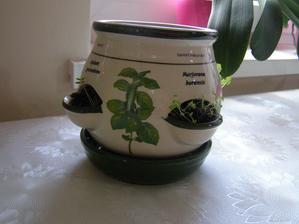 darcek od znamej - malo by mi tu vykvitnut 5 druhov byliniek