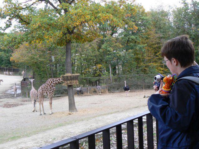 Sraz JTSP v Brně - U žiraf jsme strávili nejvíc času - Žirafka a žirafky ;-)