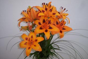 ...takéto oranžové