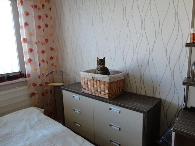 Miláčik-mikeš - v košíku už nespááva...prešiel k nám do postele:)