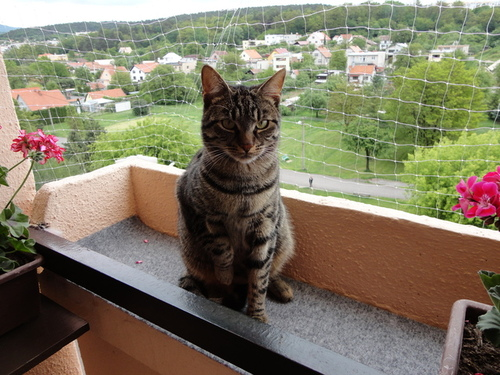 Miláčik-mikeš - na balkone..