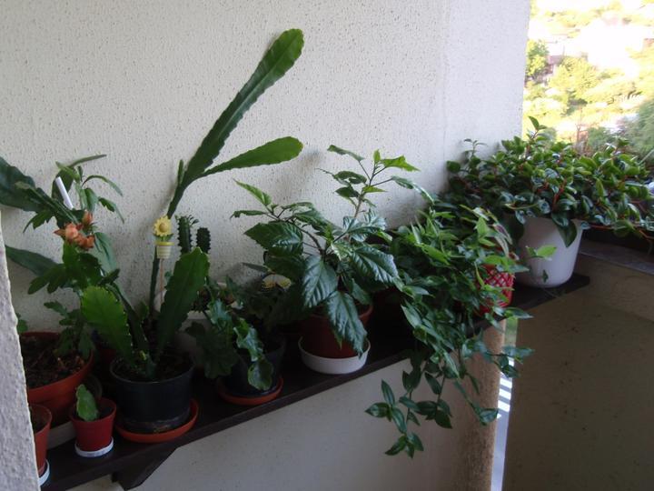 Moja záluba-kvetinky.. - balkon