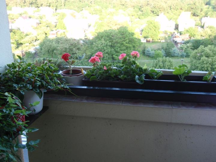 Moja záluba-kvetinky.. - Obrázok č. 3
