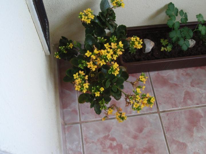 Moja záluba-kvetinky.. - Obrázok č. 4