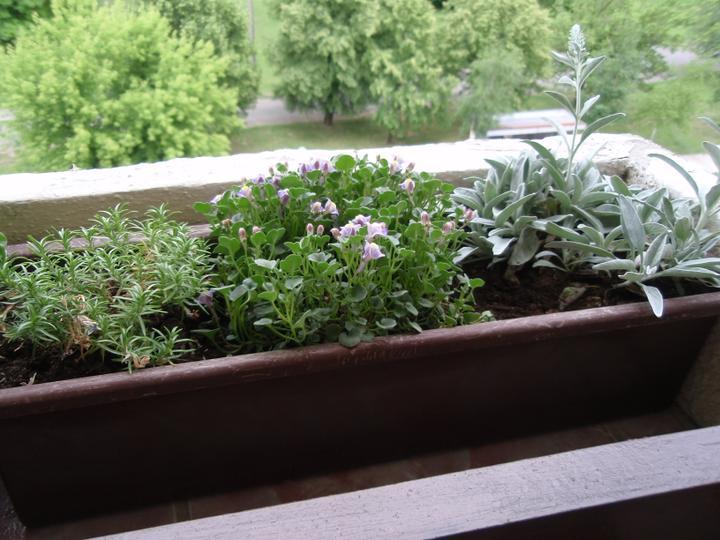 Moja záluba-kvetinky.. - skalnicky
