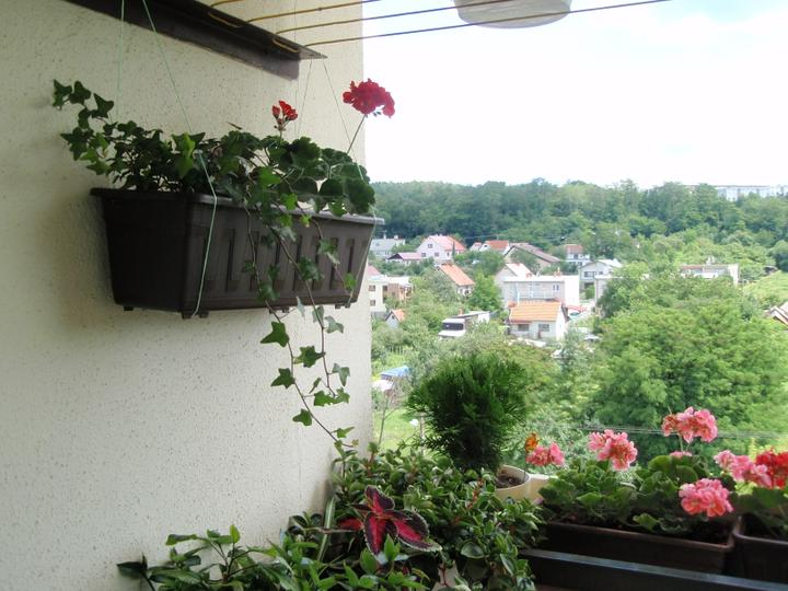 Moja záluba-kvetinky.. - zmes balkonoviek