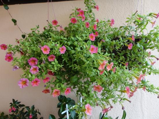 Moja záluba-kvetinky.. - milionbells