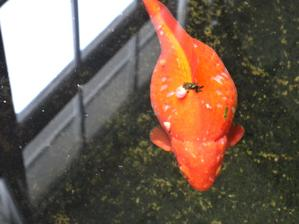 trosku vacsia rybicka:)