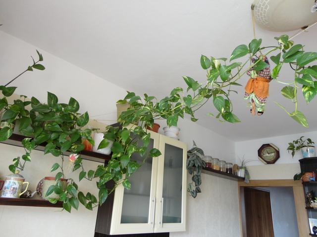 Moja záluba-kvetinky.. - potosovec