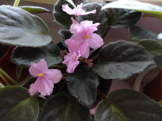 Moja záluba-kvetinky.. - Obrázok č. 65