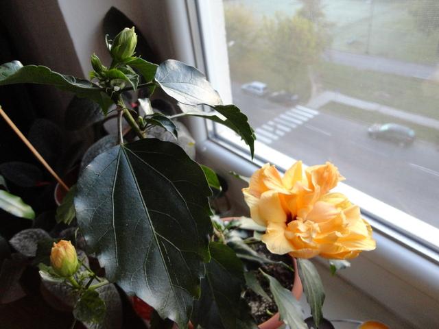 Moja záluba-kvetinky.. - mini cinska..plna :)