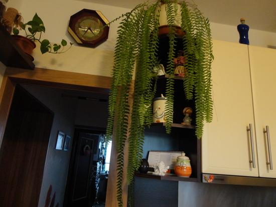 Moja záluba-kvetinky.. - paprad bola delena...uvidime či sa chytii