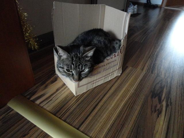 Miláčik-mikeš - taketo krabice oblubuje-čo najmenšie:)