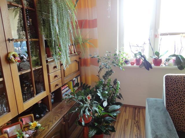 Obyvačka - kútik kvetov