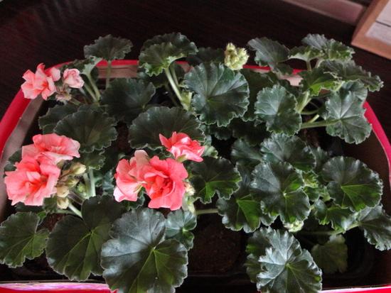 Moja záluba-kvetinky.. - Obrázok č. 87