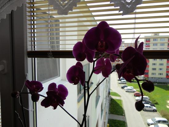 Moja záluba-kvetinky.. - Obrázok č. 93