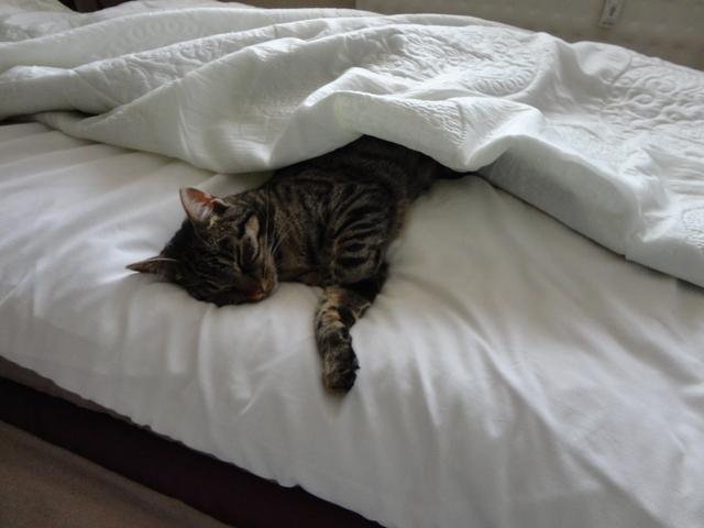 Miláčik-mikeš - A taktoo dnes v spálni:)