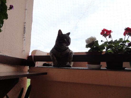 Miláčik-mikeš - veget..na balkone