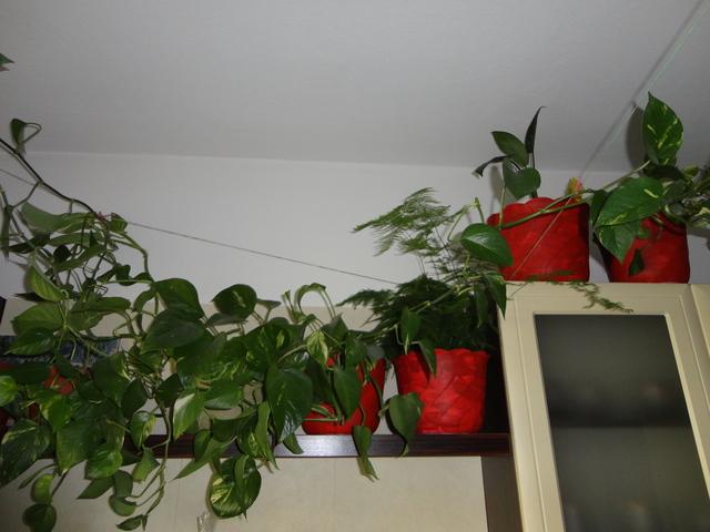 Stara kuchyna-nova.. - črepníčky majú nový šaat:) skutočnosti sú tmavšie