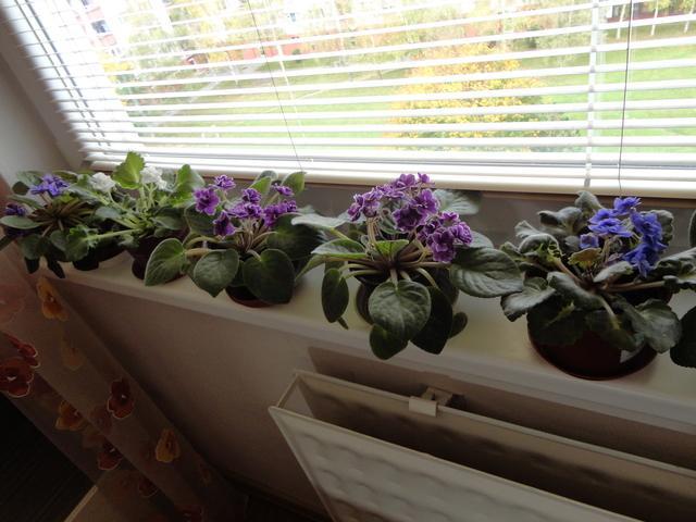 Moja záluba-kvetinky.. - Obrázok č. 154