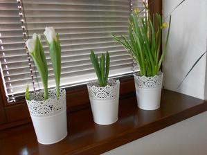 Obývačkové okno 2013- tulipán, hyacint, narcis