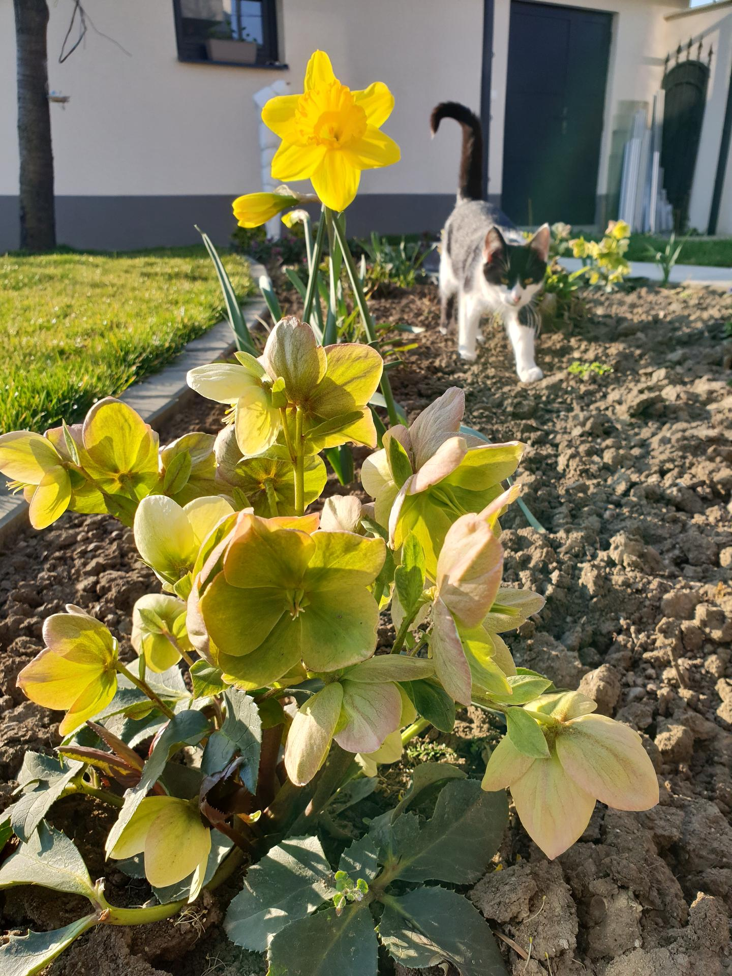 Dvor a záhradka - Obrázok č. 2
