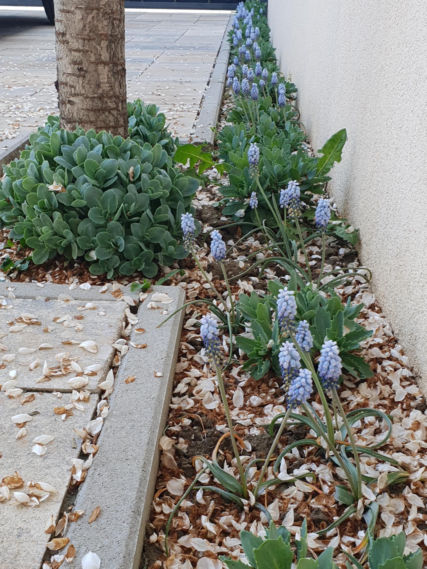 Dvor a záhradka - Obrázok č. 3